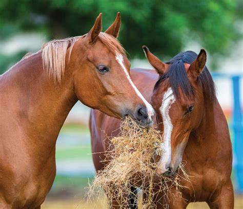 Healthy Foods for Healthy Horses