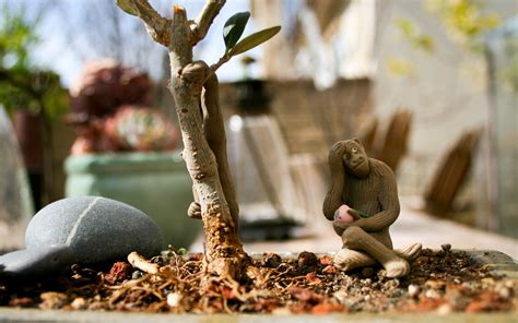 Bonsai Olive Tree Monkey Background Wallpaper by Terry